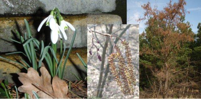 Angiosperm's early blossom